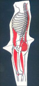 skelett-web
